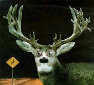 deer in headlights femdom bdsm jaa4u bangkok