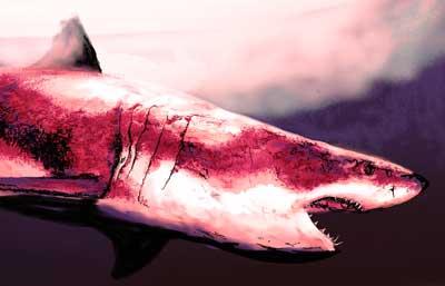 red-shark