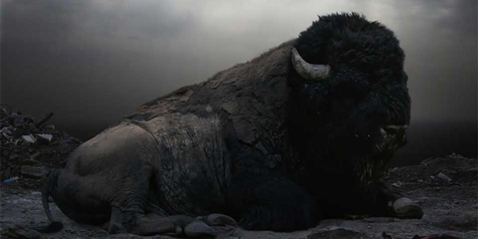 buffalo-story Mistress Wael